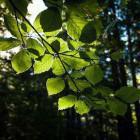 1-Vrtača iz Završnice - v gozdu
