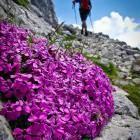 12-Botanični raj na Krnu