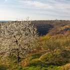 8-Slovenian Istria, self-guided hiking tour
