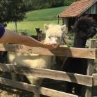 19-Little Paradise Tourist farm, Prekmurje, Eastern Slovenia